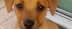 Happy Adoption Day Winston now Archer