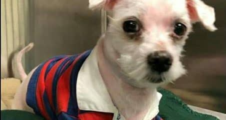 Will you help us save this little life at Miami-Dade Animal Services kill shelter?