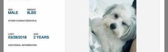 LOST DOG, CUTLER BAY, MIAMI