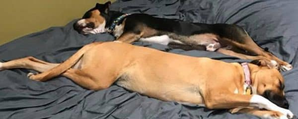 Murphy and Alex enjoyed their afternoon nap together!