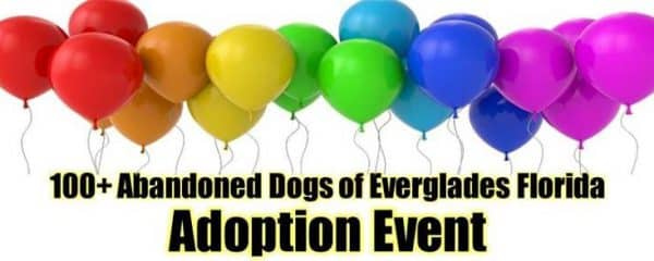 Today!! 100+ Adoption event from 12-2pm.