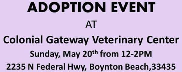 THIS SUNDAY 12-2 ADOPTION EVENT