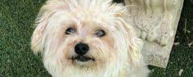 Happy Adoption Day Gilda now Abby!!