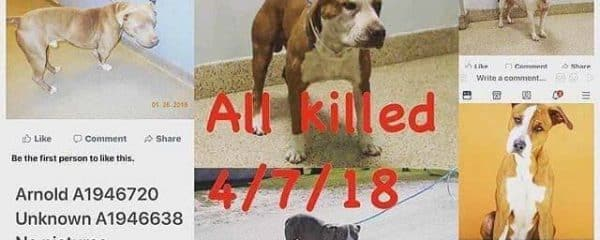 ALL THESE BEAUTIFUL FACES KILLED IN ONE DAY!! AT MIAMI DADE ANIMAL SERVICES KILL SHELTER.