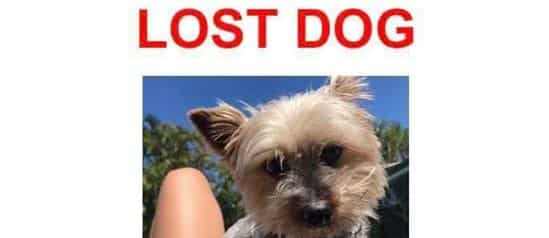 Courtesy Post – We do not have this dog!