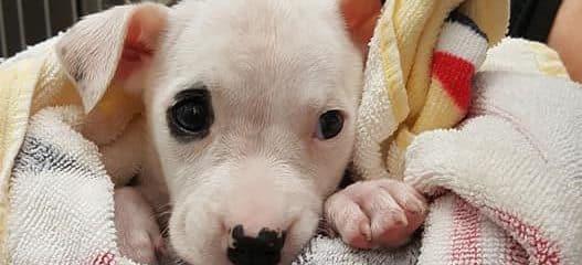 Parvo Puppy Update