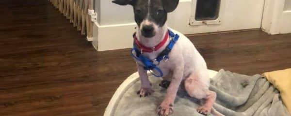 Little Benjamin is still looking for his forever home…