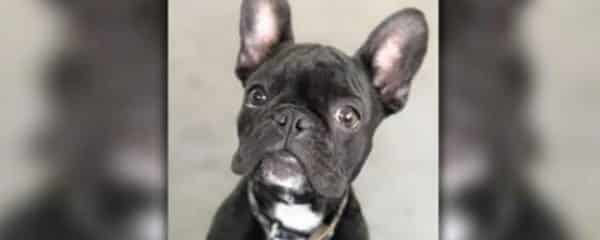 Courtesy Post … 100+ Does Not Have This Dog.