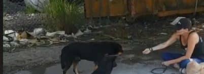 Endless Abandoned & Roaming Dogs