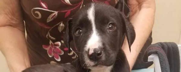 Friday Parvo Puppy Update