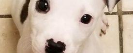 Puppy Juliette