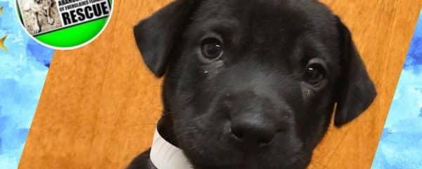 Puppy Weston