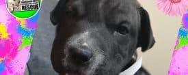 Puppy Whoopie