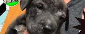 Puppy Wyatt