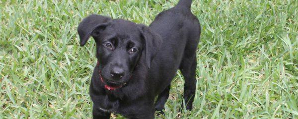 Happy Adoption day puppy Gretchen!!!
