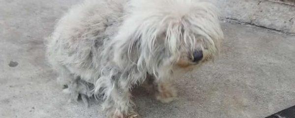 Josie being seen by the vet…