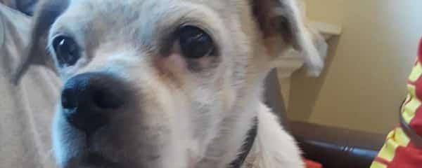 Please help us help Stella