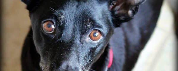 Sweet Xena is still waiting for her forever home…