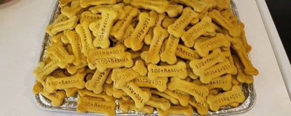 Bars Biscuits at the Rescue House!