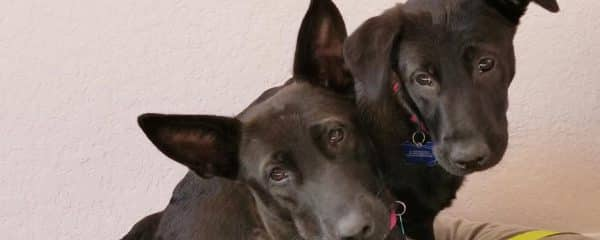 Godiva and Gage..still searching for their forever home..
