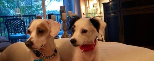 Sonny and Cher need their forever home.