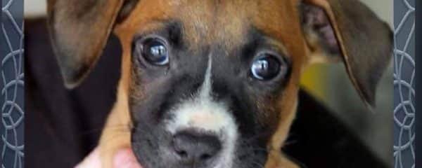 It's Puppy Time!!! Capri