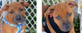 WHY ARE THESE 2 GORGEOUS BOYS STILL WITHOUT A FOREVER LOVING HOME?
